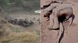 Zagadkowa śmierć słonia i krokodyla w Zambii